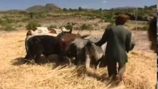 Ethiopian Countryside Farming