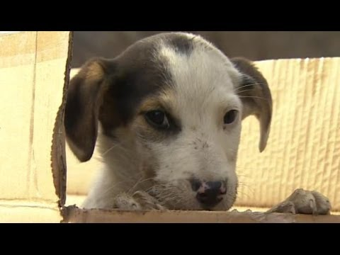 Sochi stray dogs saved by Russian billionaire Oleg Deripaska - BBC News