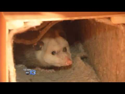 Brasstown Drops Possum To Ring In 2014