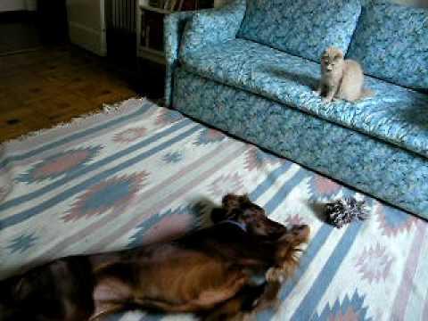 Animali divertenti ally simil paperissima cane e gatto for Youtube cani e gatti