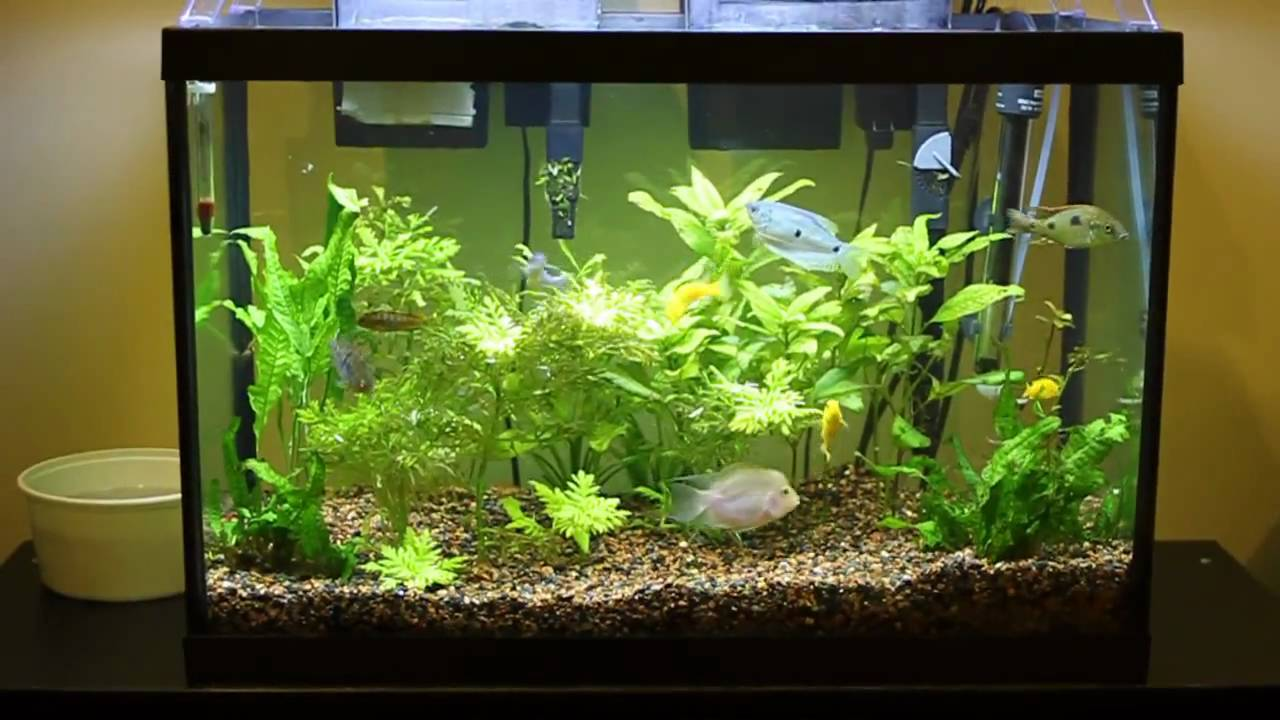 20 gallon fish tank 44 aquariums 44 gallon corner fish for 55 gallon aquarium decoration ideas