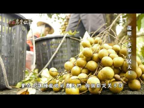 高雄農業故事館-龍眼(影片長度:15分06秒)