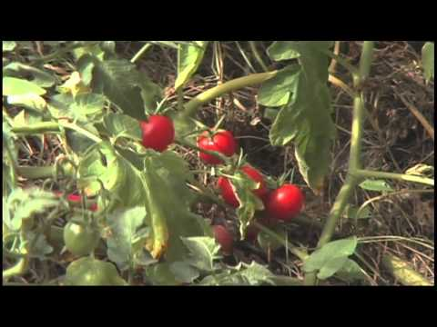 Permaculture 2015 Permaculture Part 4 Oregon Urban Family Farm CSA Episode 1304