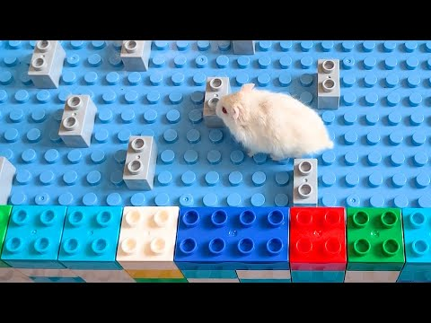 My Funny Pet Hamster in Lego Maze - Obstacle Course for Hamster