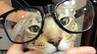 SMARTEST CAT ALIVE!