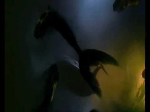 La Sirena [Trailer 2012]