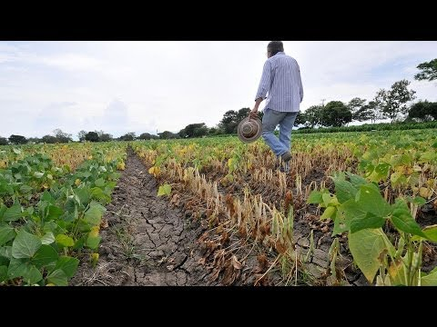 U.N. Climate Panel Issues Dire Warning of Threat to Global Food Supply, Calls For Action (1/2)