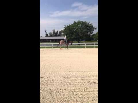 Goody - Beautiful Roan QH Gelding Video #1