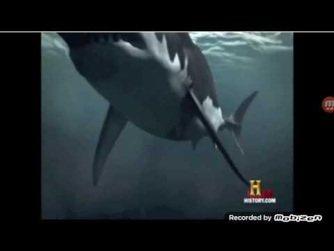 Megalodon vs leviathan (sperm whale)