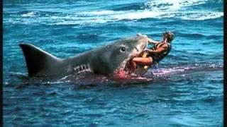 Shark Eats Man