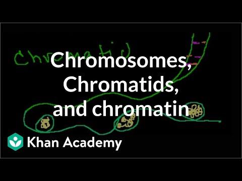Chromosomes, Chromatids, Chromatin