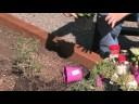 Growing Herbs : How to Design an Herb Garden