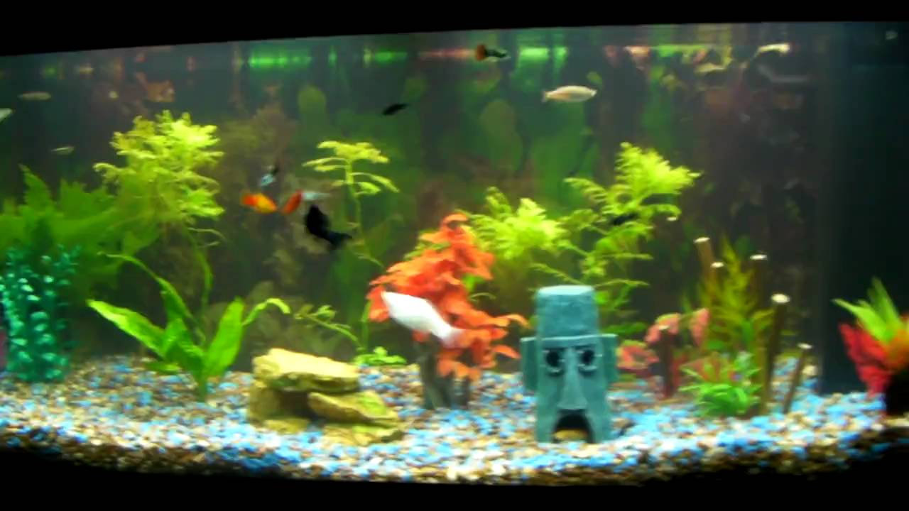 COOL FRESHWATER FISH PETS