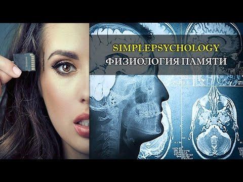 Психология памяти. Физиология памяти и воспоминаний.