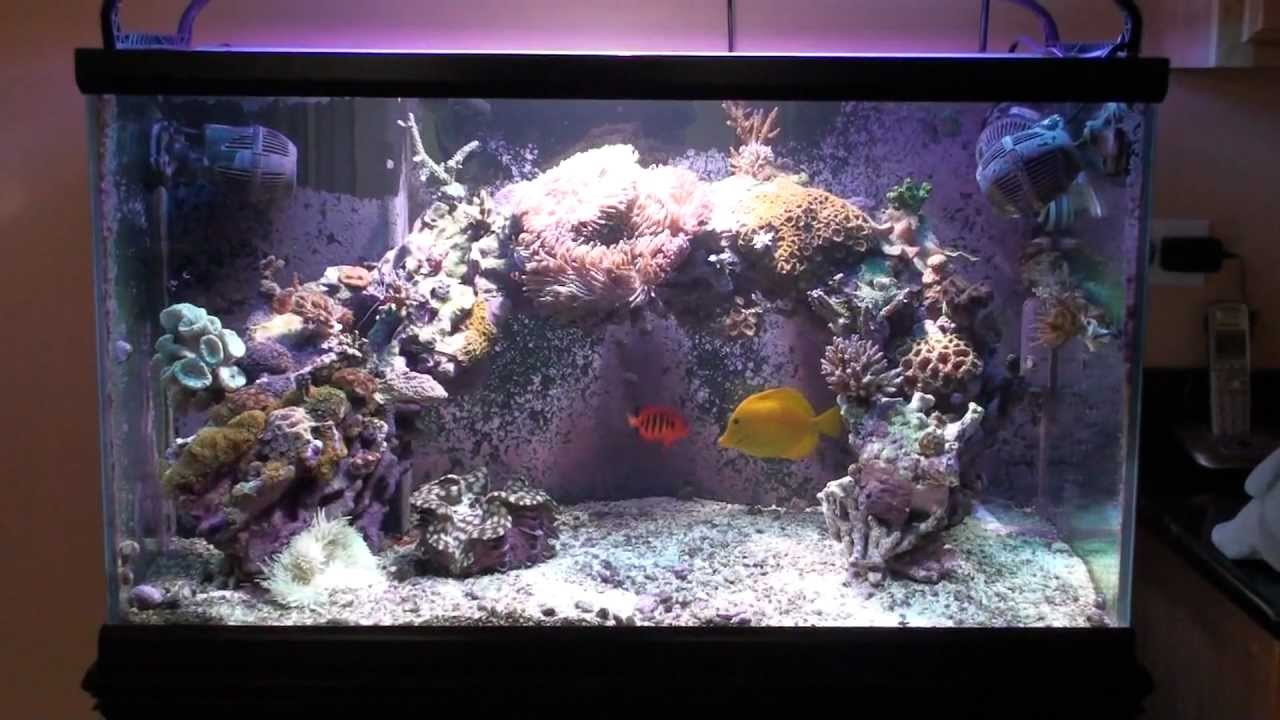 Salty Reefer 65 Gallon Reef Aquarium 04 18 2011 Youtube