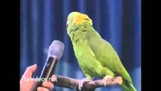 El loro cantor