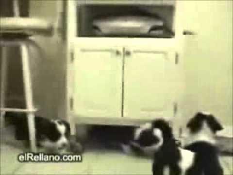 loquendo gatos y perros gilipollas