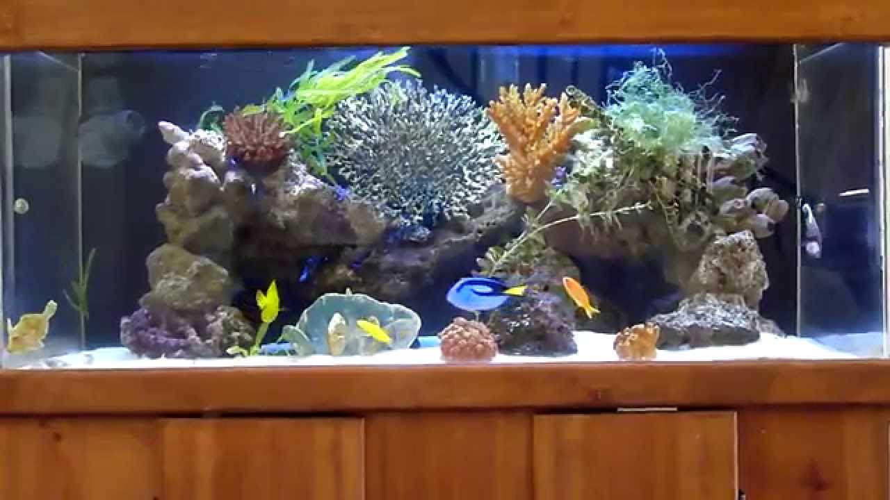 100 gallon marine fish tank 100 gallon reef img 1321 for What do i need for a fish tank