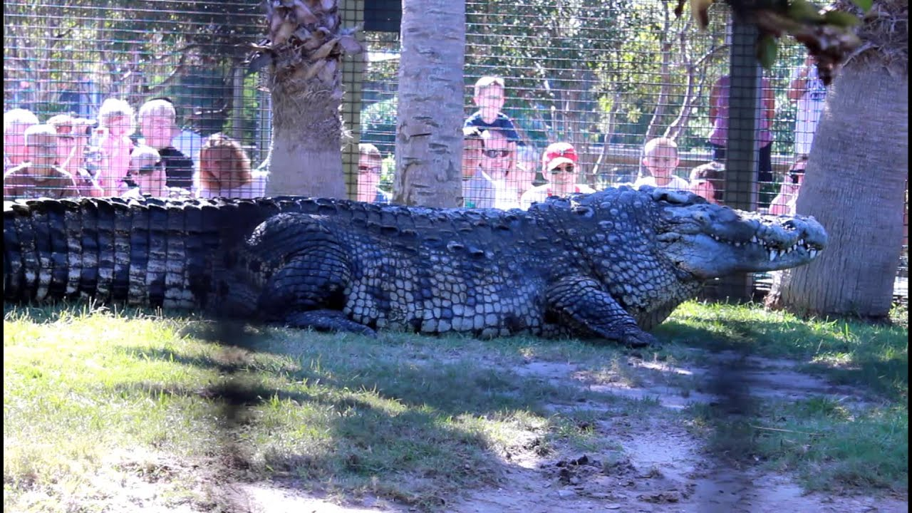 Largest crocodile ever - photo#4