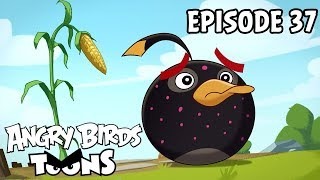 Angry Birds Toons #37 - Clash of Corns