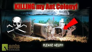 OH NO! SOMETHING IS KILLING MY ANT COLONY!