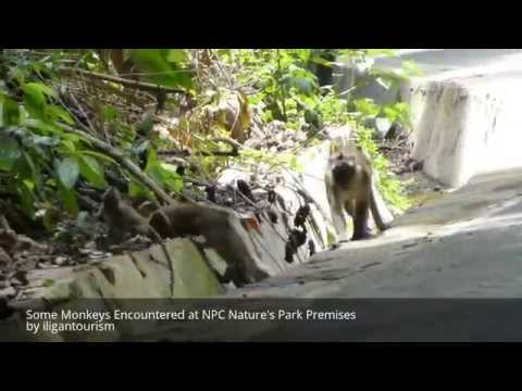 Encounter with some Monkeys at the Premises of NPC Nature's Park