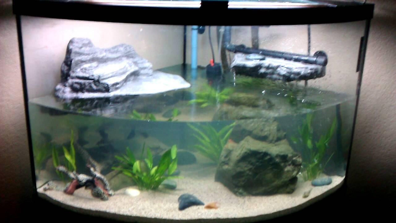 Possible Aquatic Turtle Tank/Habitat Setup Update Rena xP3 - YouTube