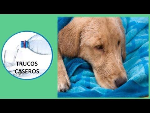 Como tratar la diarrea del perro con productos naturales - Que hacer cuando un perro tiene diarrea.