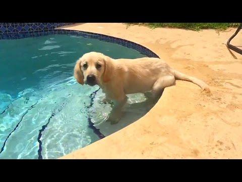 Super Cooper Sunday #8 - Cooper Tries Swimming!