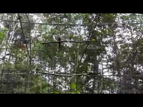 Day6 (Animal Rescue Center, Amazon) - NOISY parrots 10 Day Ecuador & Amazon Adventure (May 2014)