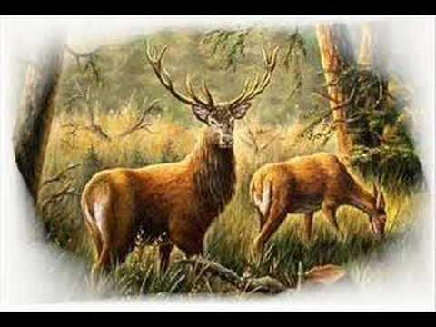 Poľovnícke signály Začiatok činnosti