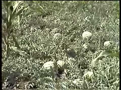 Seminis Seeds