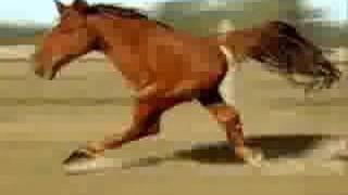 Two legged horse