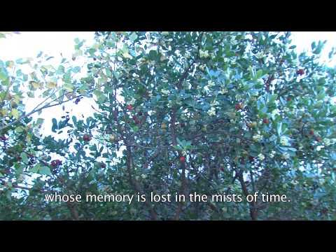 Vídeo promocional do Centro Interpretativo de Belver, Gavião