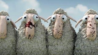 Oh, ovca!