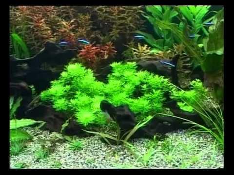 Примеры дизайна аквариумов