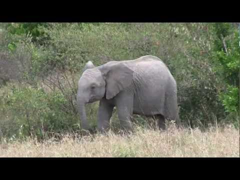 Safari in Kenya - Masai Mara