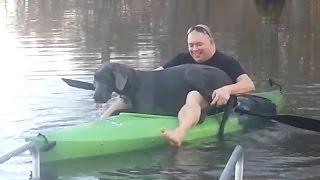 Gran danés en un kayak