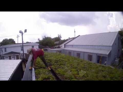 Green Roof Install WillimanSt
