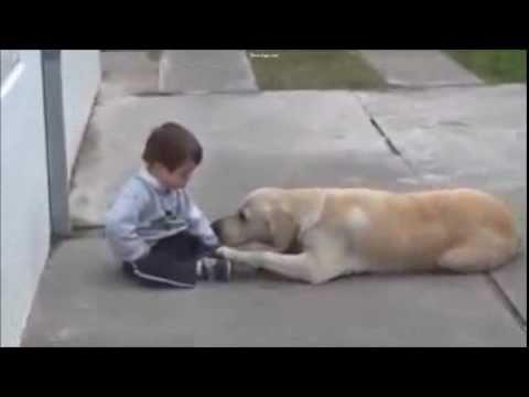 Image video vidéo très touchante entre un enfant trisomique et un labrador