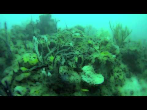 Grenada Marine Protected Area Dive