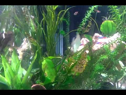 55 gallon corner fish tank youtube for 55 gallon corner fish tank