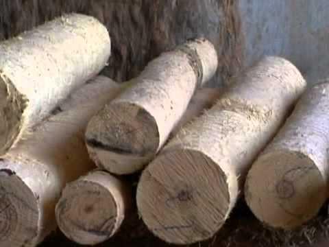 Reflorestamento com árvore nativa do Brasil (2)- Programa Globo Rural