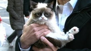 Grumpy Cat on GMA