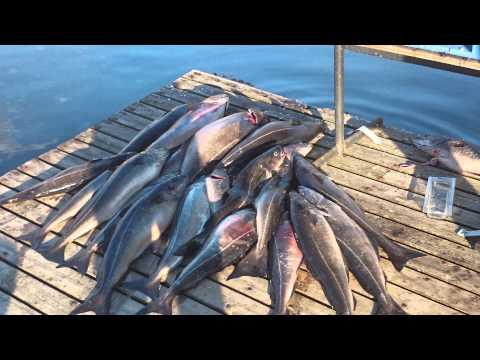 Kalastusta jäämerellä