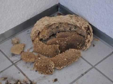 achtung wespennest hornissennest entfernen rolladenkasten selber d mmen reparieren und abdichten. Black Bedroom Furniture Sets. Home Design Ideas