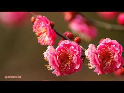 Một mùa xuân nho nhỏ 2016 Trần Hoàn Thanh Hải Phương Nga
