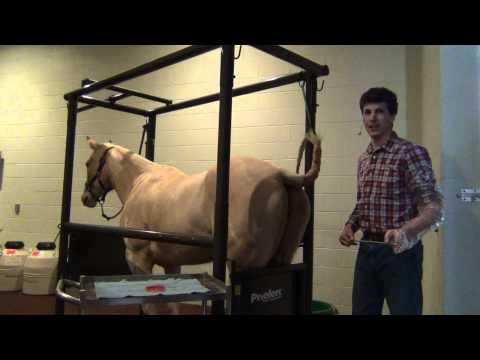 How to Make Sure Your Mare is Ready for the Reproductive Season