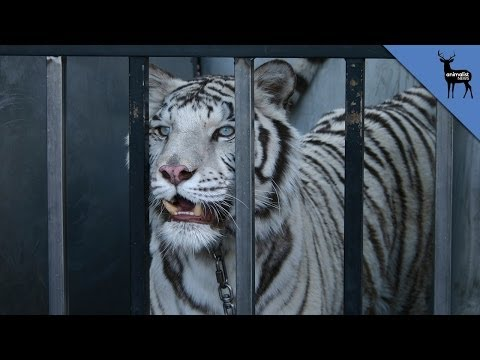 Should Circus Animals Be Illegal?