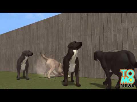 Walka psów: kobieta chce miliona dolarów odszkodowania po tym jak jej psy zabiły beagla